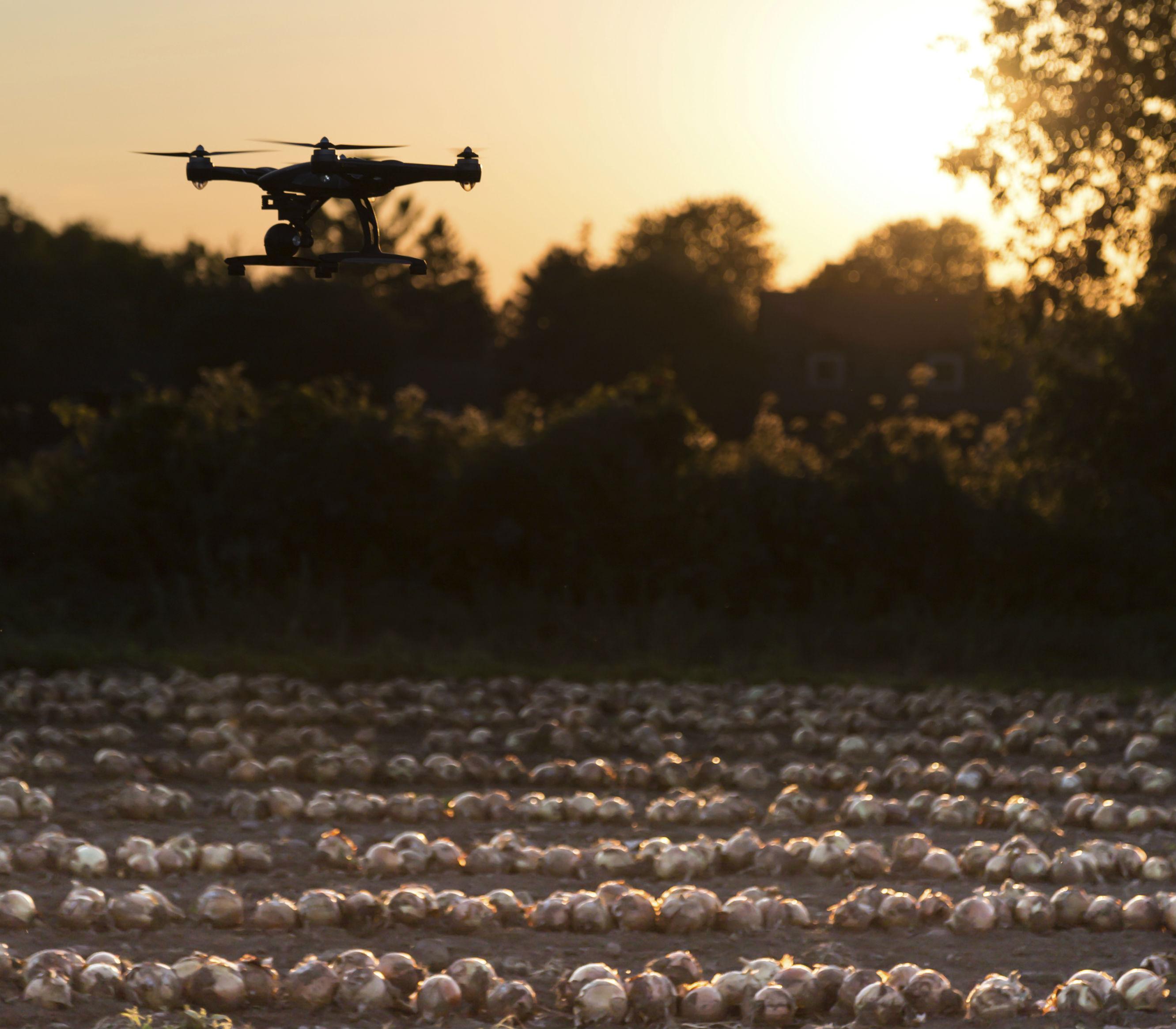 Drone-Sunset-Field-cropped.jpg
