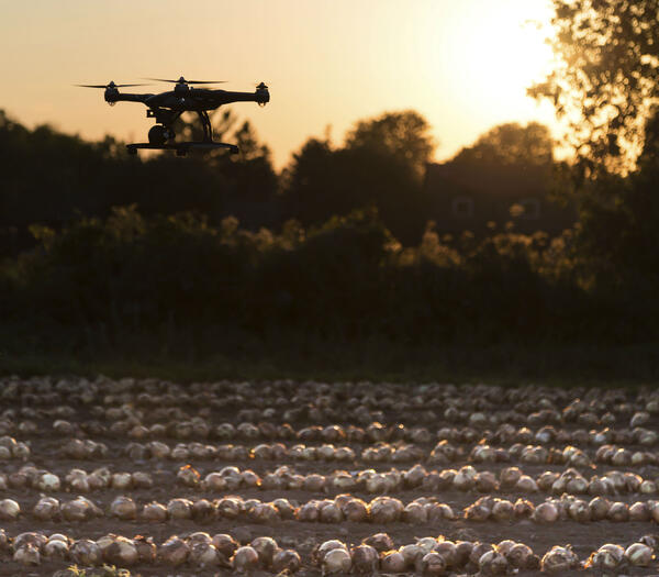 Drone-Sunset-Field-cropped.jpg